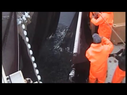 Fishing Vessel Purse Seiner Ship Catching Sardine in Croatia Part  1 (HD)