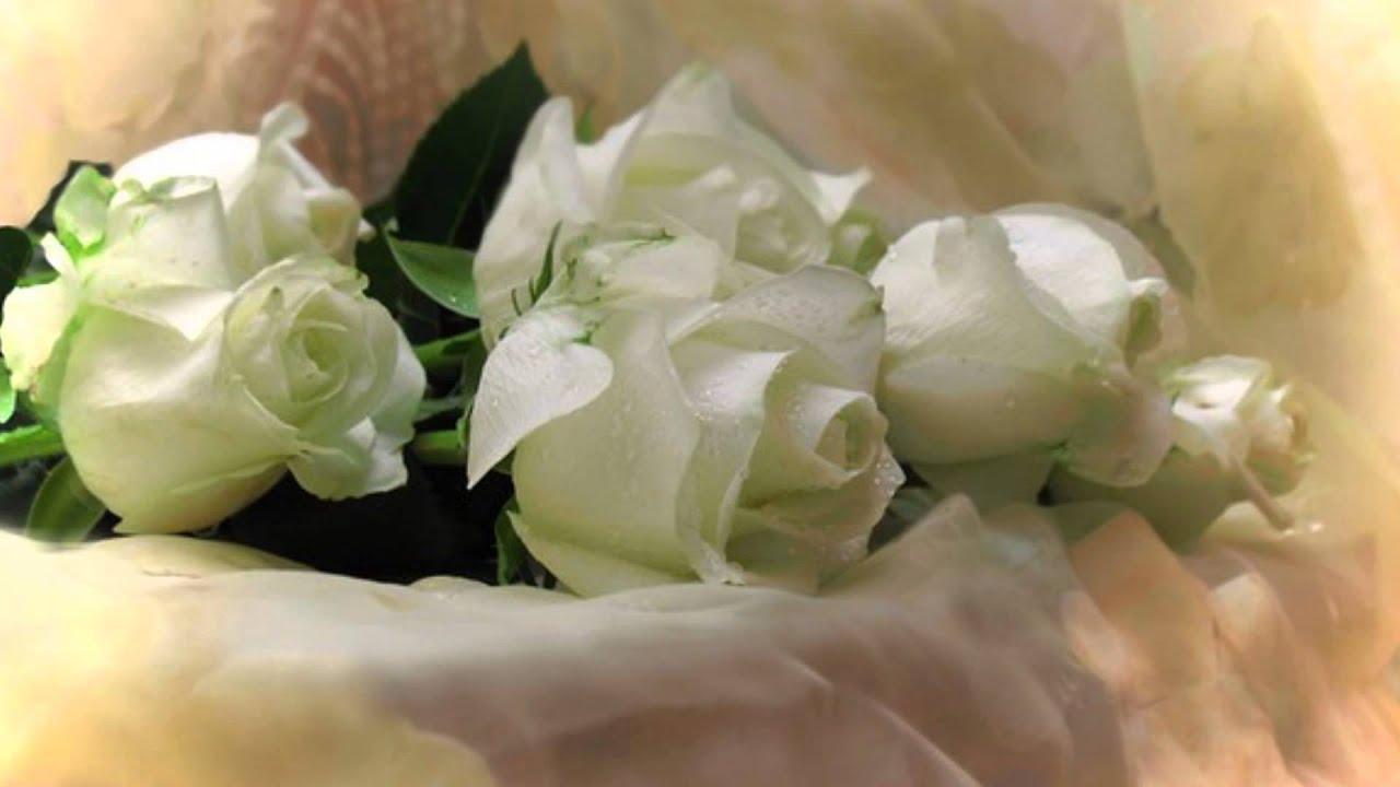 Белые розы на день рождения открытка 7418 65