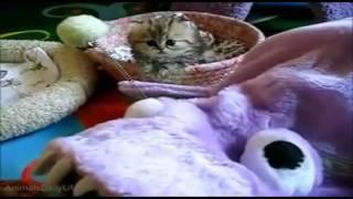 Download Lagu Sevimli kediler Gratis STAFABAND