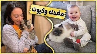 قطط مضحكة جداً - اضحك مع القطط حتي البكاء 😂 (جديد 2019)#9