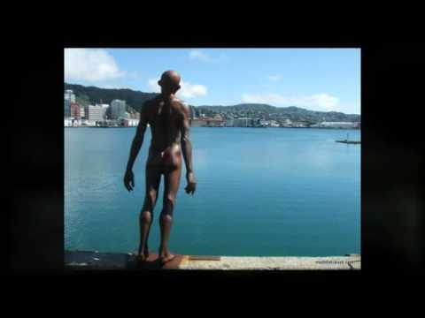 Wellington Travel Guide: Travel Tips For Wellington New Zealand