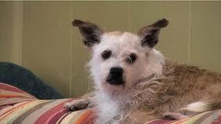 OFSDS  Sharkey, a Lap Dog?  Feel Better Peanut.
