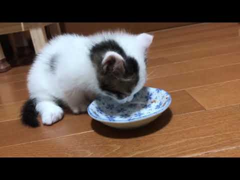 It is adorable how the kitten goes to the toilet right after eating.