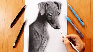 "How to Draw ""Little Ceylin"" Dog"