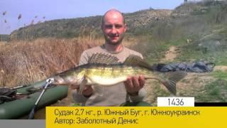 клев рыбы южноукраинск