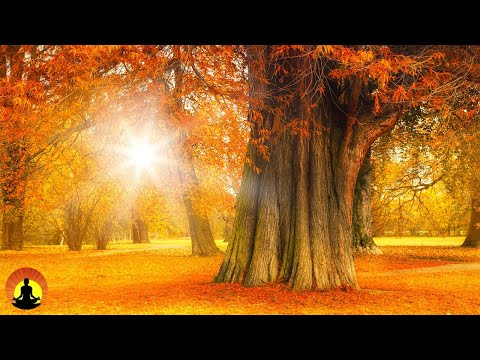 Relaxing Music, Meditation, Healing, Sleep Music, Calming Music, Yoga, Zen, Relax, Study, Spa, ☯3606