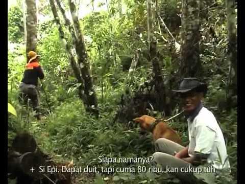 BABI VS ANJING (akumassa Padangpanjang | 2009 | 13 34 | Subteks...