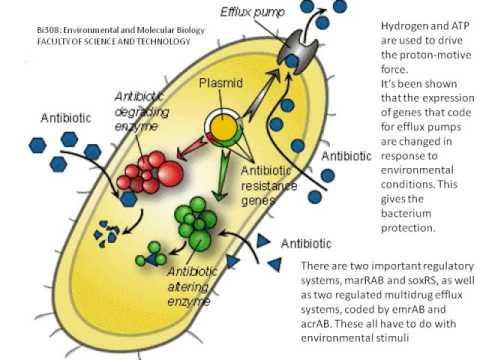 The Multiple Antibiotic Resistance Phenotype in Escherichia Coli