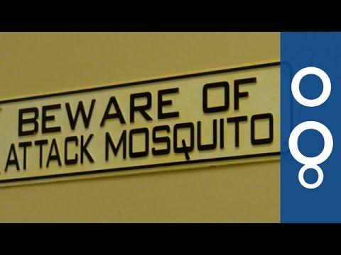 Kill Mosquitoes To Kill Malaria - Futuris