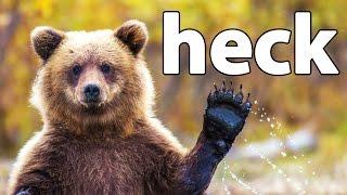 HECK | Bear Simulator