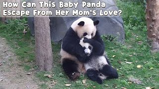 How Can This Baby Panda Escape From Her Mom's Love? | iPanda
