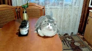 Прикол с котом Петровичем 2#