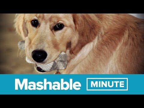 Insane Dog Eats Entire Drawer of Socks | Mashable Minute | With Elliott Morgan