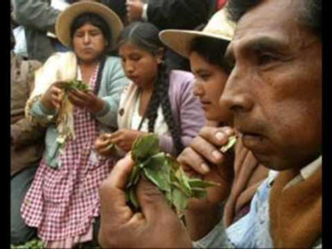 mascar la hoja de coca ( costumbre milenaria)