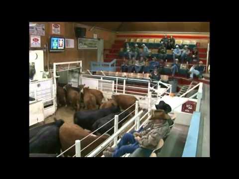 Torrington Livestock Auction