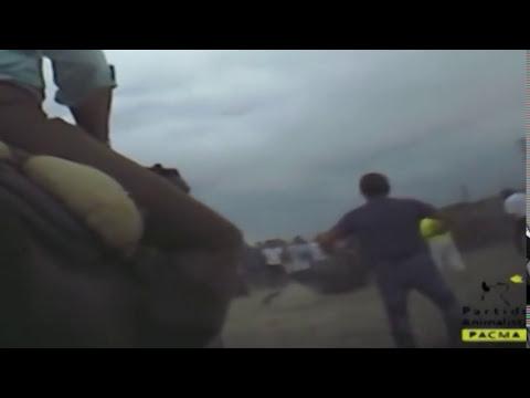 'Elegido' muere en el torneo del Toro de la Vega