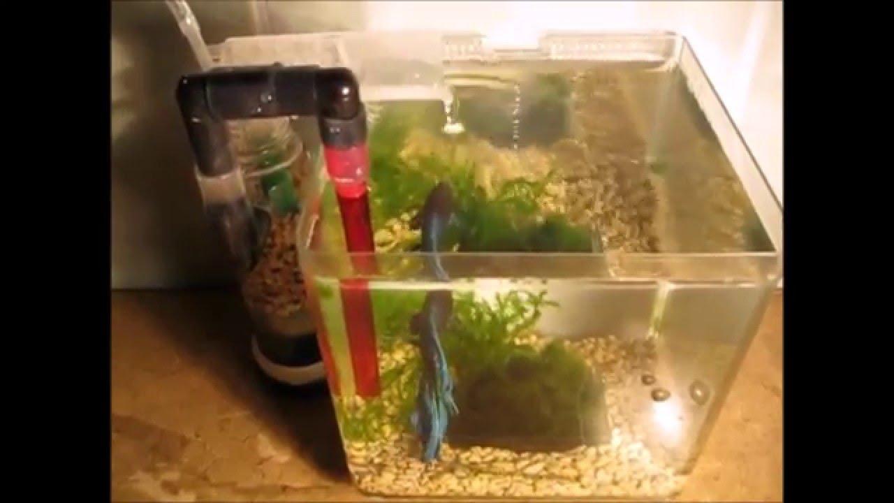 Как сделать тише фильтр для аквариума