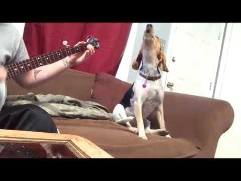 なかなかの美声?!飼い主さんの演奏に合わせて歌う犬