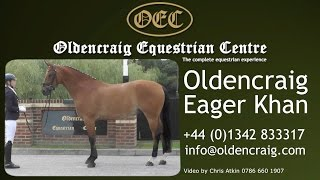 Horse For Sale: Oldencraig Eagar Khan