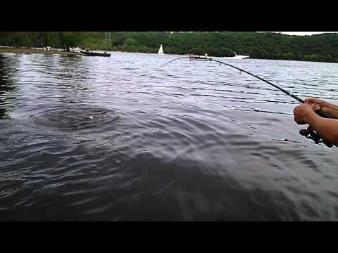 30 Pound Asian Carp - St. Croix River