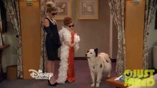 "Dog With A Blog - ""Stan Has Puppies"" Clip"