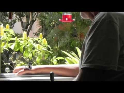 Colibríes de Caracas-Venezuela (Colibrí agotado)