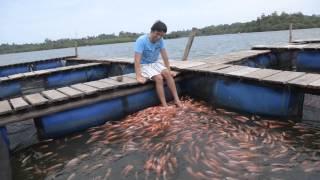 Fish Massage in Sri Lanka