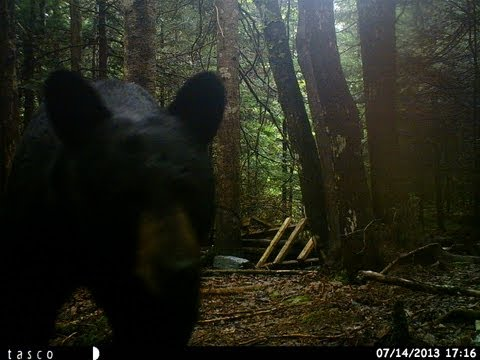 Shotgun Black Bear Hunt