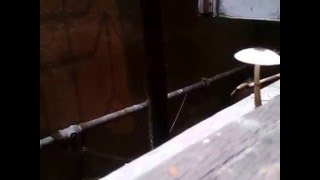 Mushrooms (Chatrak) Video Clip