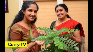 How to grow Curry Leaf Plant in Northwest of United Sates - video in English