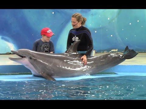 Дельфин - Про Друзей