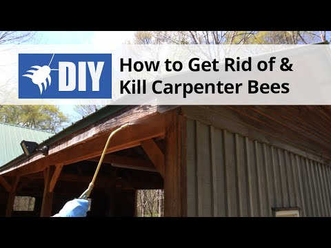 Brian 39 S Bee Butter For Carpenter Bees