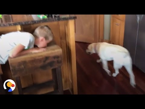 Smart Dog Plays Hide and Seek With Human Brother   The Dodo