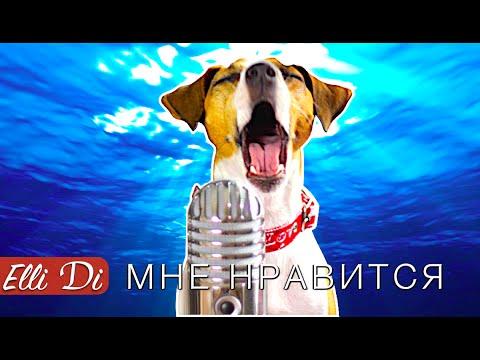 Егор Крид - Мне нравится | СОБАКА ДЖИНА ПОЁТ | Elli Di Собаки