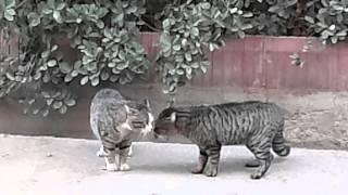 دعوای گربه ها در ایران اصلا به نفر سوم ربطی نداره این دعوا .