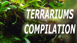 Terrariums and paludariums compilation video HD