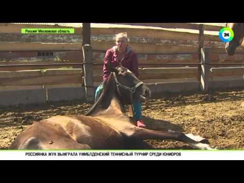 В Подмосковье волонтеры содержат приют для лошадей
