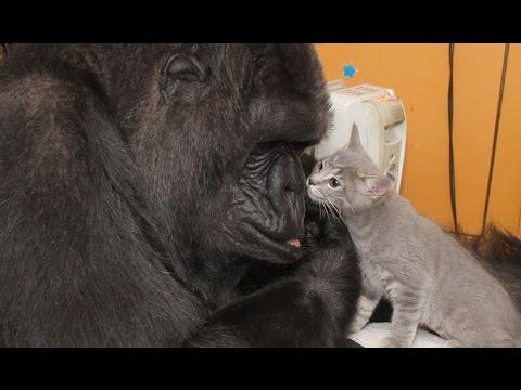 Meet Koko's New Kittens