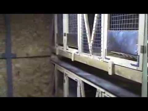 клетка для кроликов в шеде часть 3 финал