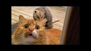 Funny and Cute Animals Compilation - Cutest Animals Ever