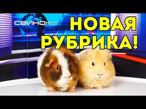 СВИНОnews: новая рубрика, победители конкурса / SvinkiShow