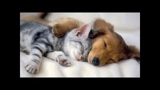 🐶 🐱Cute is Not Enough   Funny Cats and Dogs Compilation (2018)🐶 🐱