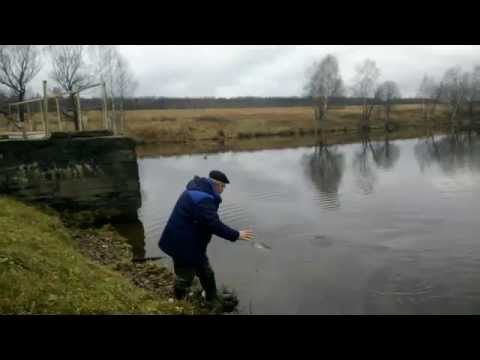 рыбалка на лопасне весной