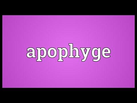 Header of apophyge