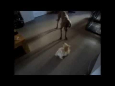 dogwalkers : Ozzy Loca