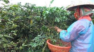 Phát triển nông sản hàng hóa theo lợi thế địa phương