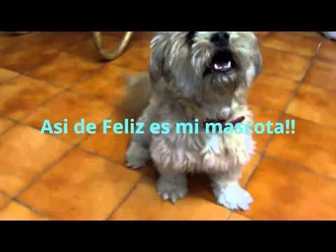 Mascotas Graciosas Y Divertidas, Animales Graciosos y Divertidos