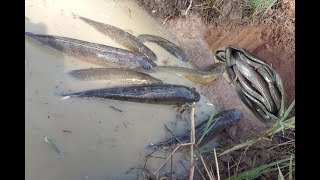 The First Trap Can Catch A lot of fish and Small Fish Make By Smart Boy in cambodia