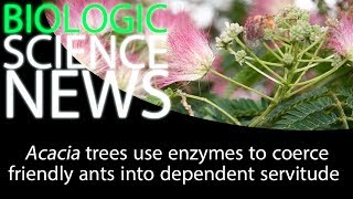 Science News - Acacia trees use enzymes to coerce friendly ants into dependent servitude