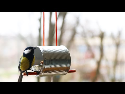 缶詰の缶を使って鳥の餌台(バードフィーダー)を作る方法